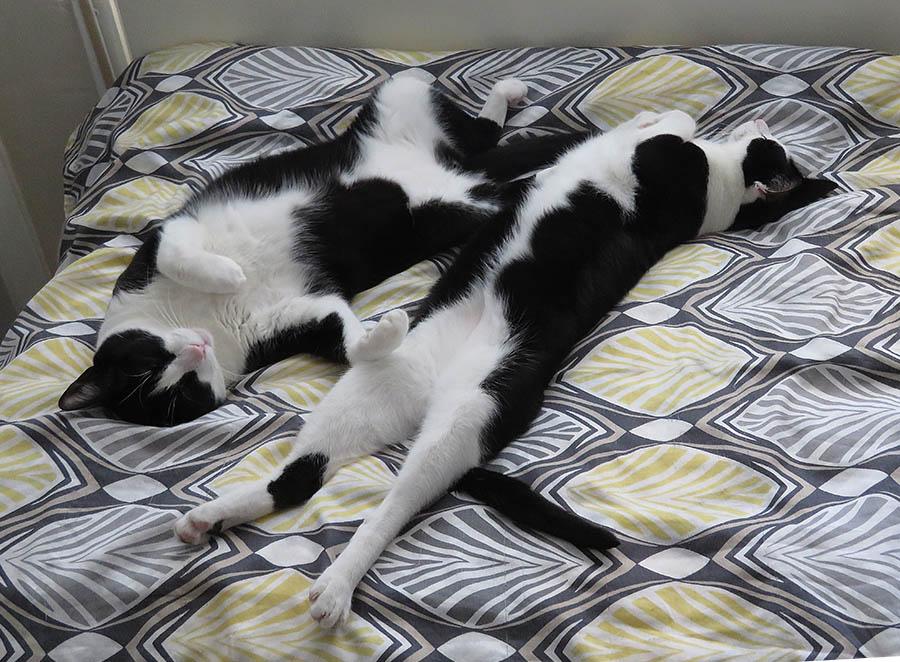 Contented Cats / Gatos Contentos