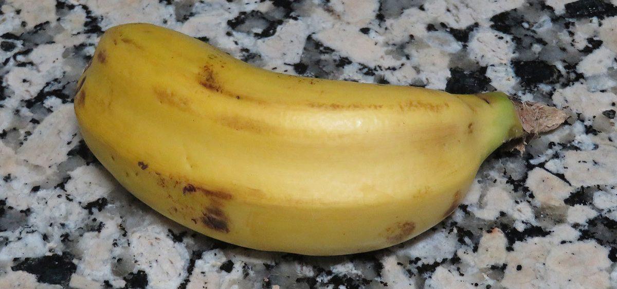 Conjoined Canary Banana / Plátano Canario Unido