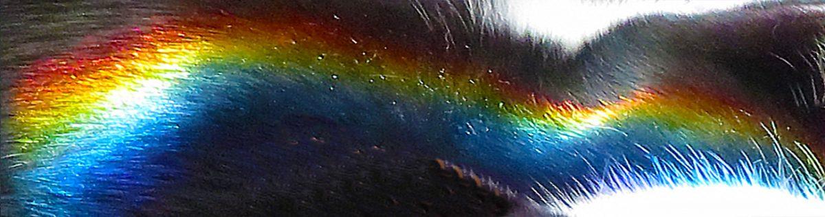 Always Chasing Rainbows / Siempre Persiguiendo Arcoiris