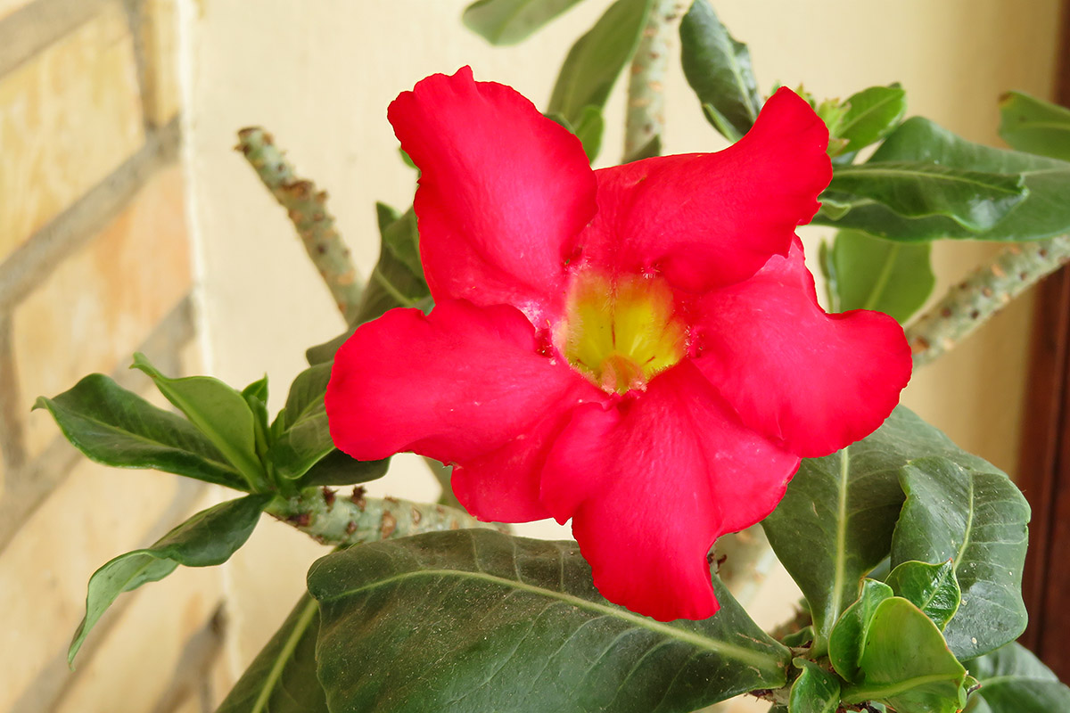Rose seeds / Semillas de rosas