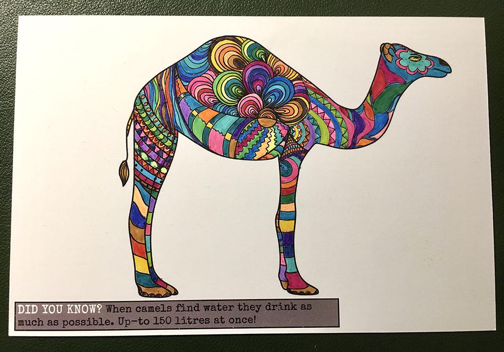 A giraffe camel / Un camello jirafa