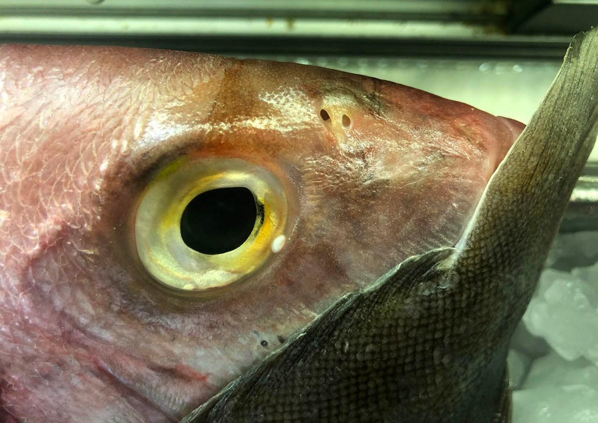 Here, fishy fishy / Aquí, pezito pezito