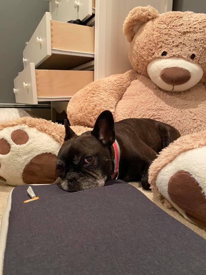 Puppy love / Amor de cachorros