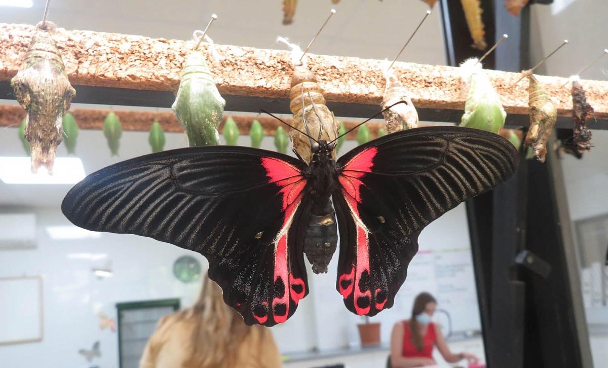 Butterfly, the superhero / Mariposa, la superheroína